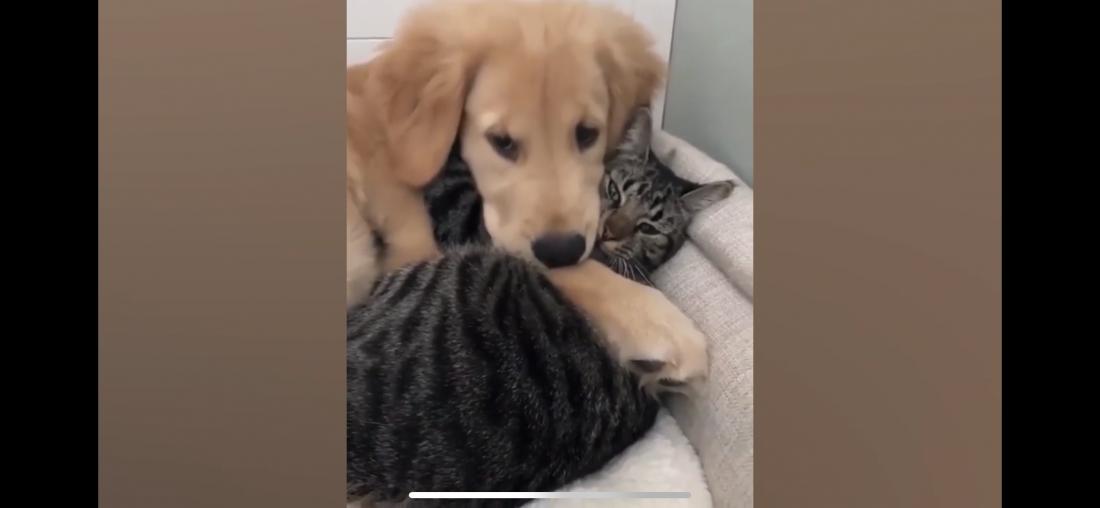 Gatito y Cahorro