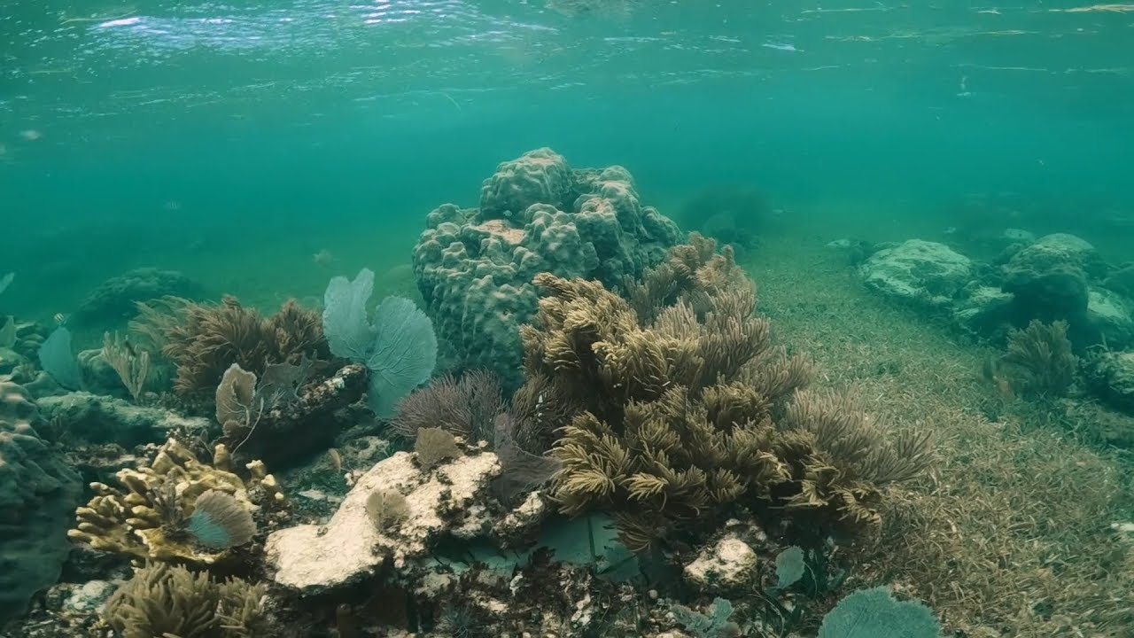 Un grupo de ambientalistas de Moce Yax Cuxta han acusado al Grupo Xcaret de causar severos daños sobre arrecifes de coral.