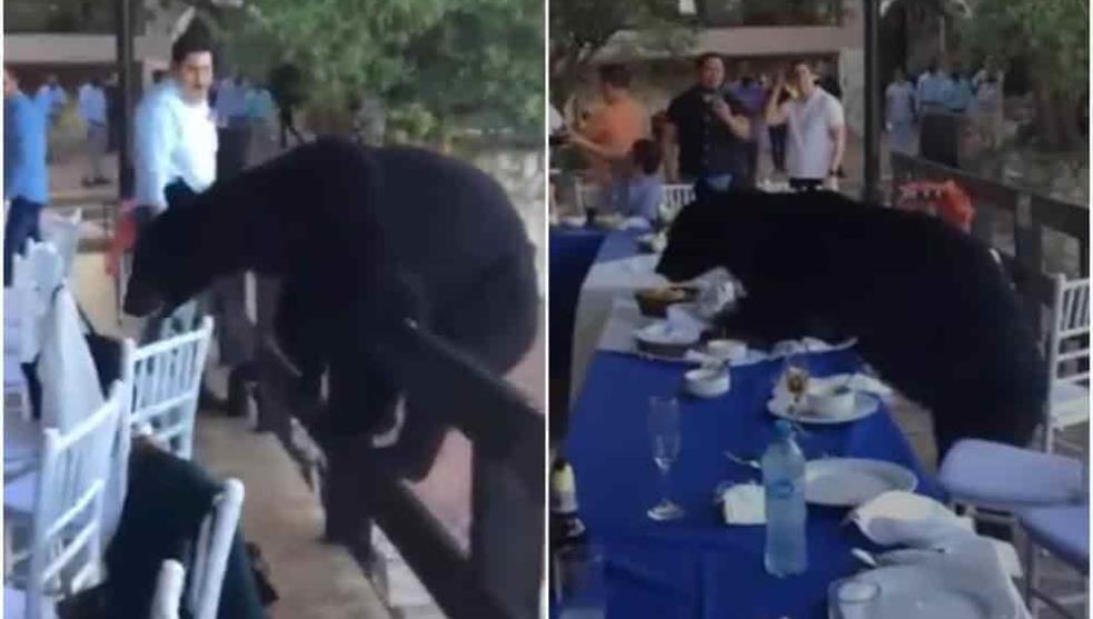 Uno oso irrumpe en una fiesta de San Pedro Garza García. El evento fue captado en video por los asistente de la fiesta, la cual terminó.